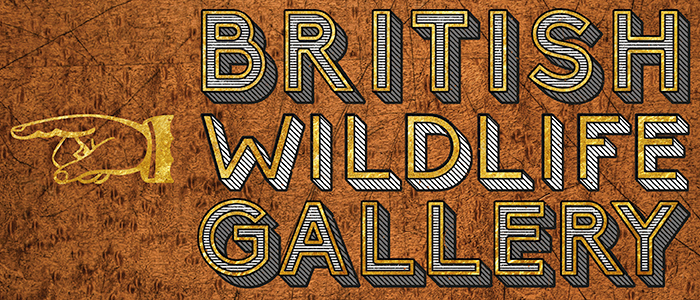 British Wildlife Gallery, Bristol Museum